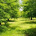 【旅遊景點】花蓮 雲山水自然生態農莊 夢幻湖