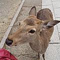 【日本自由行】京都跨年 六天五夜 D2 (2010-2011)