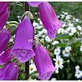 玉山的花花世界