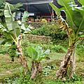 20120718農耕週第三天