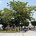 圖書館前的花與樹