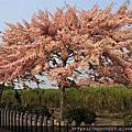 春遊金砂桃紅灧
