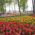 【茨城 ● 国営ひたち海浜公園】日立海濱公園(景觀篇) & 鬱金香浪漫花海