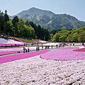 【琦玉県 ● 秩父羊山公園】芝桜の丘 & 浪漫粉紅芝櫻花毯