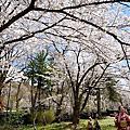 【日本東北 ● 角館】角館「武家屋敷通り」散策
