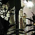 鼠麴草餐廳