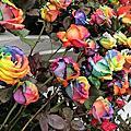 0315士林官邸賞彩虹玫瑰