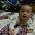 071101-小白哥哥與小黑弟弟(五個月大)