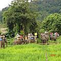 MAE TAMAN ELEPHANT CAMP CHIANGMAI 清邁美達夢大象營的大象表演