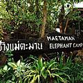 MAE TAMAN ELEPHANT CAMP CHIANGMAI 清邁美達夢大象表演
