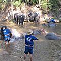 湄登大象學校+叢林騎大象+騎乘牛車+竹筏漂流