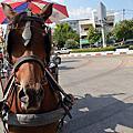 南邦古城騎馬之旅