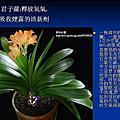 家庭常見植物功效