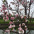 2016小時光櫻花祭