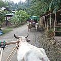 大象營之2