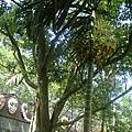 山板樵綠世界17