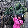 011317 梅花森林