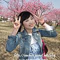 【お花見】古河桃祭り