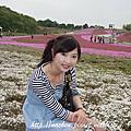 【GW】芝櫻09年05月03日