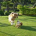 201104桃園石門山+綠風草原餐廳一日遊
