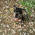2011-05-08狗