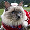 帶貓在花蓮鯉魚潭散步