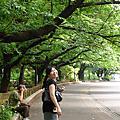 990611 東京-我的旅伴