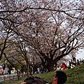 2014 東京追晚櫻 Day 1 熊谷櫻堤