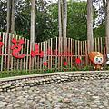 2017古坑荷苞村油桐花