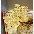 菇菇成長記