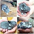 20110520兔寶寶20天紀念