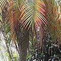 北安國中校園植物