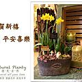 2014-年節組合盆栽