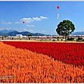 新社花海-台中花毯節2014
