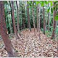 台南東山林安森林步道
