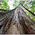 特富野拉拉喀斯巨木群