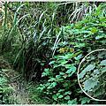 杉林溪-水漾森林單攻