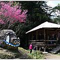 阿里山賞櫻2021