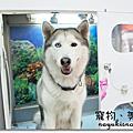 寵物自助澡堂(未開幕)