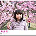 2013年0216武陵春爛漫
