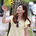 2014-06-08 黃金阿勃勒 & 大花紫薇