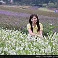 2014-10-31 大溪花海農場