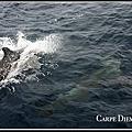 Cetacea/鯨豚