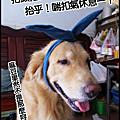 MY DOG'S 柚子