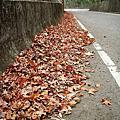 20081228尖石的楓葉掉光了