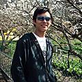 20100130 尖石賞櫻花
