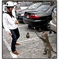 Monkey Only
