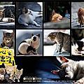2011 侯硐(猴硐)貓