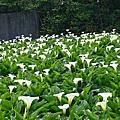 秘密花園之蒙帕拿斯