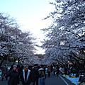 2009春遊東京--上野公園賞櫻(傍晚)